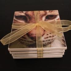 Lynx (3)
