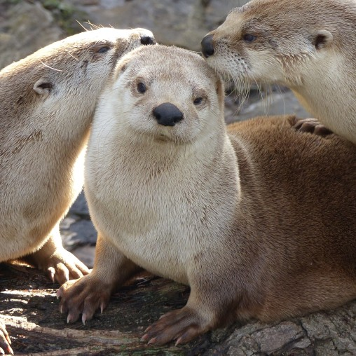 Otters (2)