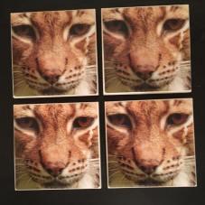 Lynx (2)