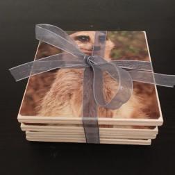 Meerkat (2)
