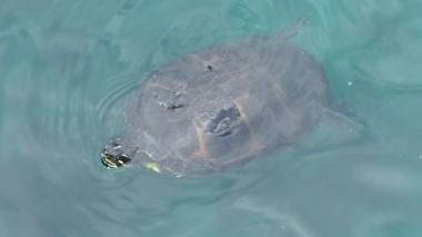 Turtle (9)